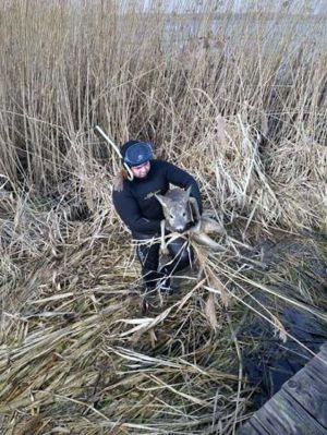 В Ривненской области спасли косулю из ледяной ловушки