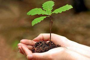 24,2 т лесных семян заготовили в течение последнего года