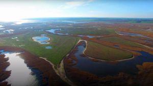 Голландські екологи борються за порятунок нашого біосферного заповідника