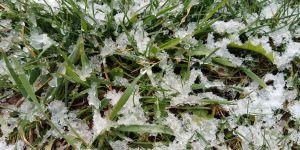 Весняний сніг — тільки на користь