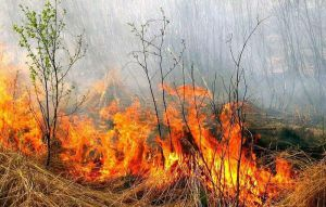 Уничтожают огнем все живое
