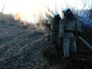 У вогнеборців «жнива»: горить суха трава