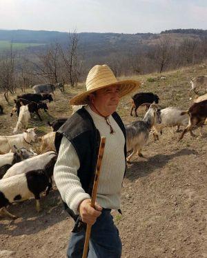 Хочеш заробляти на козах — навчися пасти! Навіть взимку...