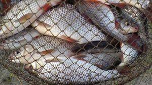 12 мільйонів гривень — збитки через незаконне виловлення риби