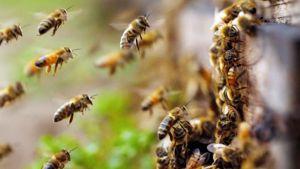 Любиш мед, полюби і бджіл