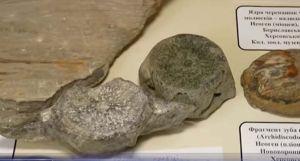 В Каховском водохранилище кита нашли