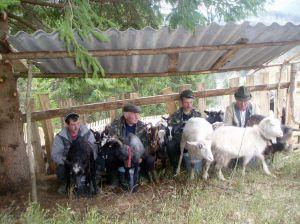 Праздник на овчарской улице
