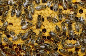 Погибли пчелы