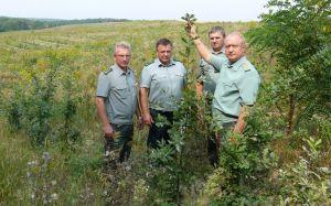 У Вінницькій області ліс росте швидше, ніж оформляють документи для його створення