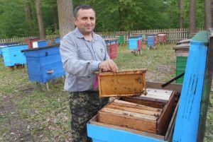 Бджільництво на Волині має тисячолітню історію
