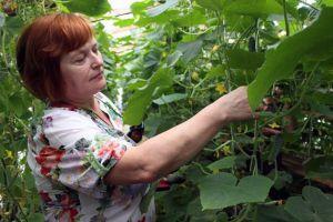 Екологічне землеробство розвивається і на Рівненщині