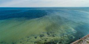Дніпро-Бузький лиман перетворюється на отруйне болото