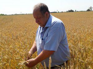 Зернозбиральна кампанія: випробування негодою