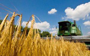Щедрые намолоты сразу обвалили цены на пшеницу