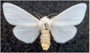 Метелик атакує