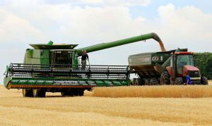 Не вистачило одного дощу, але зерно якісне