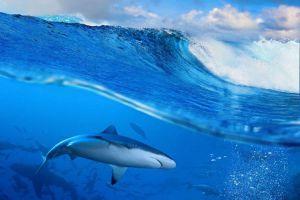 Акула налякала відпочивальників на Адріатичному узбережжі Чорногорії