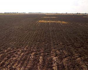 Зернові не зберуть, бо поля вигоріли вщент