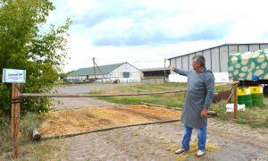 В Кировоградской области уничтожили свиней из-за АЧС