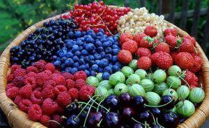 Збільшуємо експорт плодів та ягід