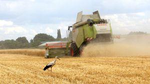 Ранние зерновые собрали. Будет ли цена на них справедливой для земледельцев?