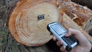 Ліс «озброюють» новими технологіями