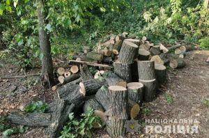 На Дніпропетровщині поліція затримала групу «чорних» лісорубів