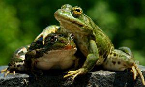 За півстоліття кількість тварин скоротилася удвічі