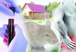 В Албании появилась первая жертва «мышиной лихорадки»
