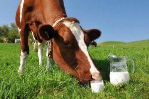 На Житомирщине стараются, чтобы молоко было европейского качества