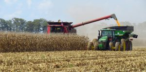 Аграрии собирают кукурузу и подсолнечник