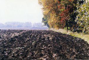 Скасування мораторію на продаж землі — ризиковане