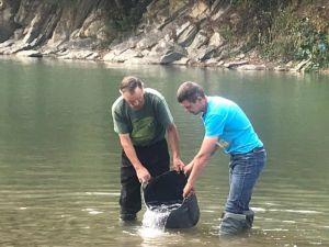 У Чорний і Білий Черемош випустили мальків лосося