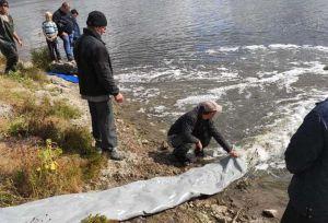 Додалося природних санітарів у Дніпрі