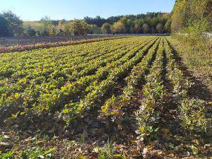 Осінь — сприятливий час для озеленення Тернопільщини