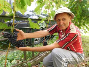 На батьковому обійсті вирощує двадцять п'ять сортів винограду