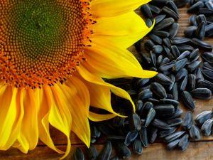 З соняшником — знов у лідерах