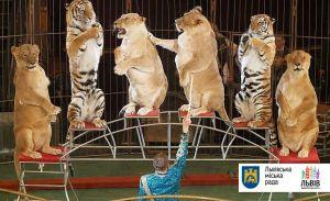 Місто Львів виступило на захист тварин