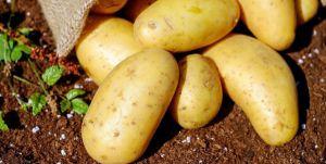 Аграрии Днепропетровской области собирают урожай