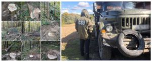 У Чернівецькій області незаконно рубають ліс