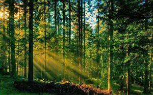 Скористатися «фінансовим кредитом» від природи
