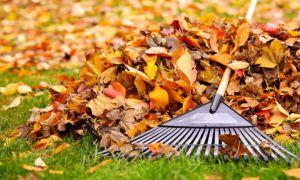 Планують збудувати комплекс з переробки опалого листя