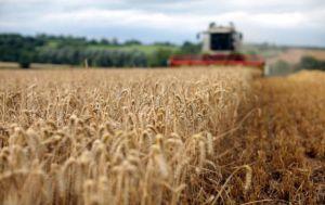 На Дніпропетровщині зібрали рекордний за роки незалежності врожай