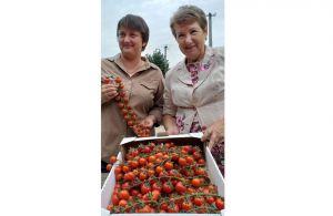 Станиця Луганська годує Київ помідорами
