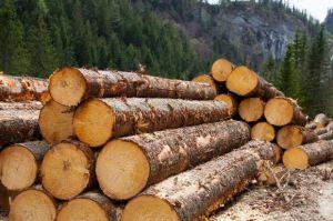 Ялицево-букові ліси захистили законом