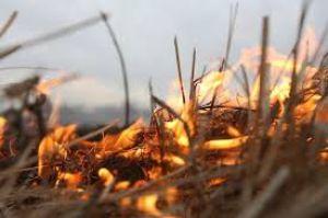 Лучше компостировать, чем сжигать