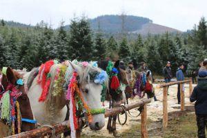 На Буковині гуцули вшанували своїх коней