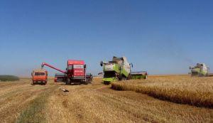 Кукуруза рентабельна даже после «обвала» цены