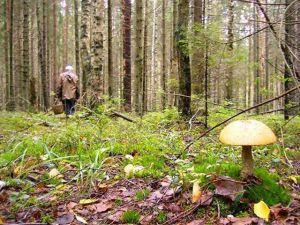 На Волині поліцейські шукають грибників
