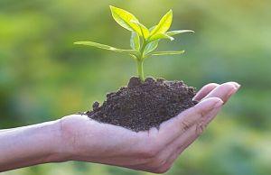 Екологічна економіка — наше майбутнє